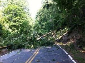 Fallen Tree on 176
