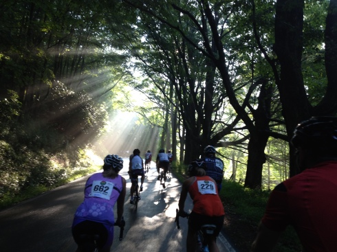Midway through the climb, heavenly sunlight pierces through the trees.