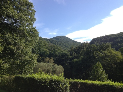 bearwallow view