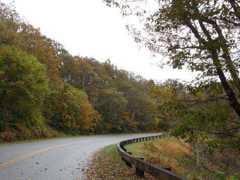 The parkway looked gorgeous with the wet, fallen leaves.