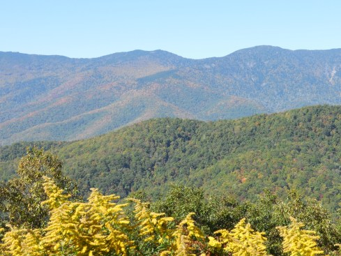There were often vibrant colors in the foreground and mountains in the background.